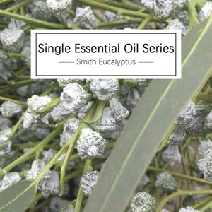 NEOILS essential oil can prevent colds, prevent fever, and purify the air. Eucalyptus essential oil