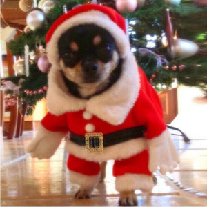 Christmas Dog Clothes Cute Festival Dressing Clothes Warm Look Vertical Standing Costumes Christmas Party Pet Supplies DDC4641