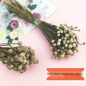 Mushroom Grass Mini Dried Natural Plant Eternal Material Real Flower Shooting Props DIY Aromatherapy Wax Brand Y1128