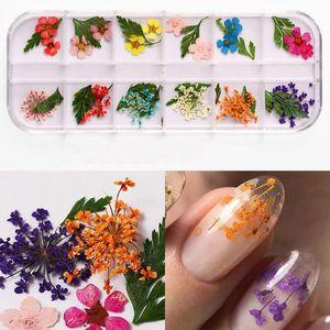 DIY Secado Flor Nail Decoración Joyería Mixta Natural Flor Hoja Pegatinas Nail Art Design UV Gel Gel Pulido Manicure Accesorios