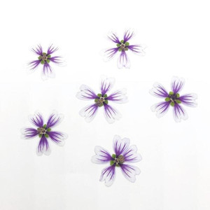120pcs Pressed Dried Malva Sinensis Cavan Flower For Epoxy Resin Pendant Necklace Jewelry Making Makeup Craft DIY Accessories