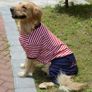 Large dog in the clothing of pet dog