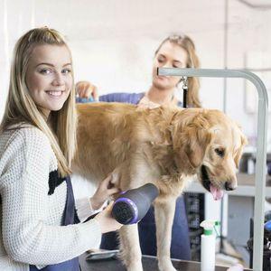 "New 32"" BestPet Large Adjustable Pet Dog Grooming Table W Arm Noose GT32"