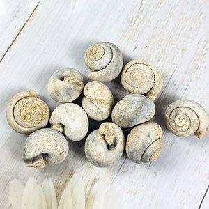 5 adet doğal hayvan salyangoz kaba taş mineraller numune biyoloji coğrafya öğretim örnek koleksiyonu rock mini saf kabuklu taş H jlfqk