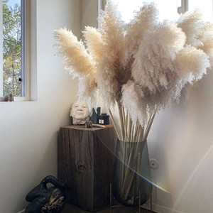 White Natural Reed Dried Flower Big Pampas Grass Bouquet Wedding Flower Ceremony Decoration Modern Home Decoration Fall Decor Y1128