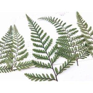 New Fern Petals Dried Flower for Card Decoration 100 Pcs Wholesale Free shipment Z1120