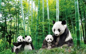 Rideau 3D créatif beau trésor national panda peinture peinture salon chambre décoration rideaux