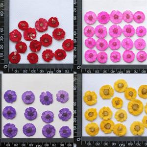 DIY Daisy Getrocknete Blumen Handgemachte Präge Maniküre Bookmark Handy Shell Botanik Exemplar Drop Line Home Dekorieren Gelb 0 3GC M2