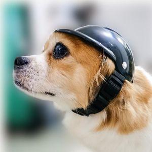 Capacete Pet New Style Ventilação cinto ajustável Buckle Dog Chapéus de segurança com suprimentos Head Pad Toy