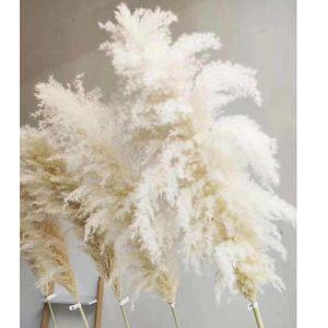 Blanc Naturel Naturel Fleur séchée Grande Pampas Grass Bouquet De Mariage Fleur De Mariage Cérémonie Décoration Maison Maison Décoration