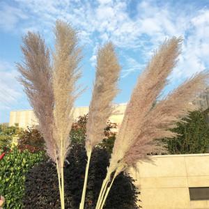 불멸의 말린 잔디 리드 1 차 색상 큰 DIY 자연 식물 무리 꽃 집 여자 남자 장식 결혼식 소품 1XL K2