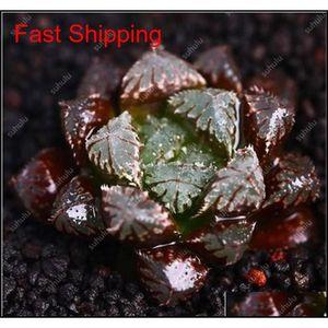 100 Pcs Potted Succulents Fleshy Shining Green Plants Haworthia Cooperi Yulu Truncata Flower Seed Lithops Pseudotr jlldPq network2010