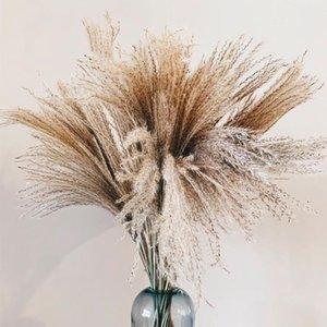 بامباس العشب المفكر بلوم 30 سنتيمتر طويل القامة ديكور الزفاف زهرة حفنة صغيرة pampas العشب ديكور المنزل ريال بامباس العشب القصب النبات الطبيعي الحلي