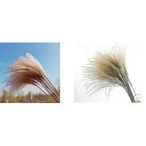 Fashion Flower Natural Plants Fluffy Woman Man Home Decoration Gift Dried Reed True Lovely Flowers Party 5 2yy K2