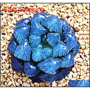100 Pcs Potted Succulents Fleshy Shining Green Plants Haworthia Cooperi Yulu Truncata Flower Seed Lithops Pseudotrun jllXlY bdegarden