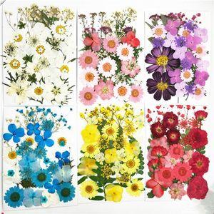 Небольшие высушенные цветы прессованные цветы DIY сохранились искусственным цветочным украшением домой Мини Bloemen декоративный высушенный цветок