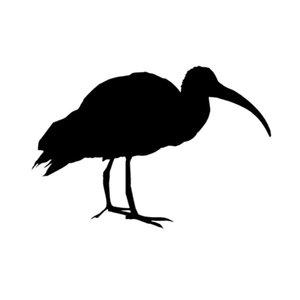 16CM*10.8CM Fun Ibis Stock Heron Egret Vinyl Car Sticker Decal Black Silver Decoration C15-0798