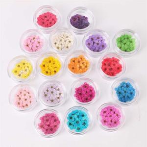 Pflaume 100 stücke Blume gepresst Blüte getrocknet mit Narzissen Box für Epoxidharz Schmuck machen Nail Art Craft DIY Accessorie