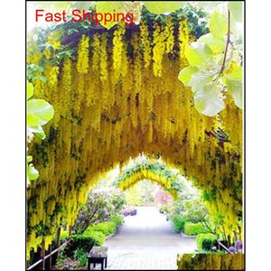 Golden Yellow Wisteria Seeds 20 Pcs Rare Purple Bonsai Wisteria Tree Indoor Outdoor Ornamental Plants Perenn qylPYY toys2010