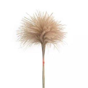 불멸의 말린 잔디 리드 1 차 색상 큰 DIY 자연 식물 무리 꽃 집 여자 남자 장식 결혼식 소품 GWD5130