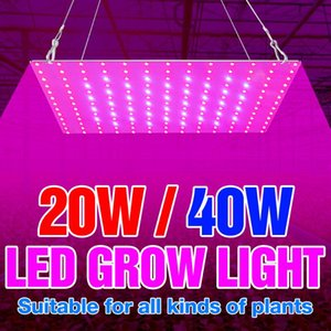 Hydroponics Plants Grow Light Indoor 220V LED Panel Full Spectrum Phyto Seedling Fito Lamp Growing Tent 20W 40W Control Lights