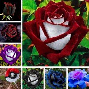 Fournitures de jardin Fournitures Noire Graines de rose avec bord rouge, couleur rare Populaire de jardin Buisson Perennial Bush ou Bonsaï Fleur pour la maison Garde ZC142