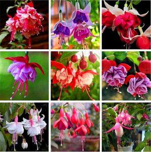 Garden Supplies 200 pcs  lot multiple color Fuchsia Chlorophytum lanterns seeds Bonsai Lantern Flowers For Home indoor plant seed Patio ZC140