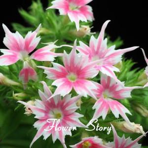 New Arrival Home Garden Plant 100 Seeds PHLOX TWINKLE STAR,Phlox Drummondii Cuspidata Flower Seeds