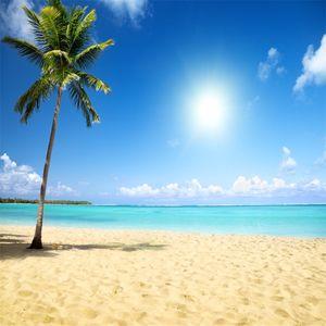 Spiaggia tropicale Sfondo a tema Photo Palm Tree Sandy Seaside Scenery Summer Holiday Sfondi di nozze Fondali in vinile per la fotografia