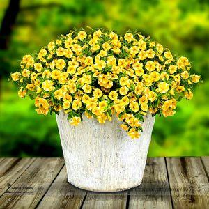 Lemon Slice Superbells Calibrachoa Petunia Annual Flower Seeds, paquete profesional, 20 semillas / paquete E3302