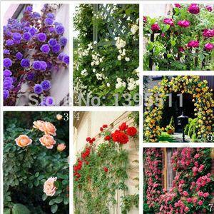 100 / tasche seltene rose samen Blumensamen Mischfarbe Kletterrosen Samen für dekoration