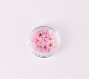Flor de flor de ciruelo de narcisos secos prensados con caja para joyería de resina epoxi haciendo arte de arte artesanal de arte accesorios de bricolaje 1274 v2