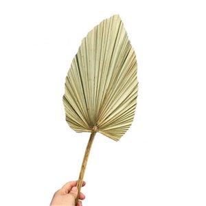 1 قطعة مجففة زهرة الطبيعية بو مروحة ليف ل diy الرئيسية متجر عرض مواد الديكور الحفاظ على أوراق النخيل شجرة ل ديكور الزفاف 1186 v2