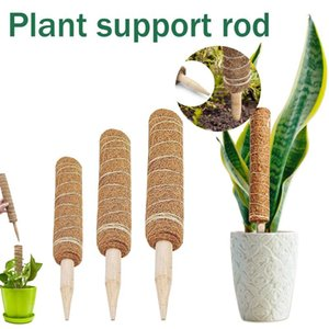 Soporte de planta Moss Pole Stick para plantas de escalada Extensión de suministros de jardín al por mayor y gota otros