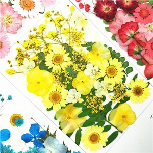Small Dried Flowers Pressed Flowers DIY Preserved Artificial Flower Decoration Home Mini Bloemen Decorative Dried Flower DWD6050