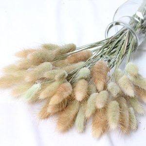 60 Stiele Pampas Gras Getrocknete Blume Bunny Tail Natürliche Pflanzen Blumenkaninchen Gras Bouquet Dekoration Zubehör 478 V2