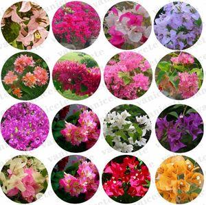 100 Pcs Bag Mixed Bougainvilleas Seed garden supplies Perennial Flower Colorful Bougainvillea Spectabilis Willd Seeds Gardens Bonsai Pot Plants ZC167
