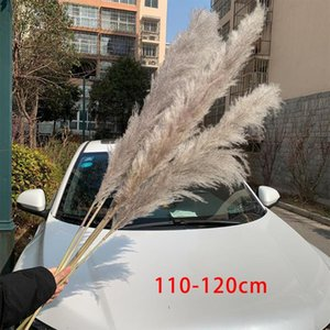 Extra Large Pampas Grass 120cm Grey White Color Fluffy Natural Dried Flowers Bouquet Boho Vintage Style For Wedding Home Decor Decorative &