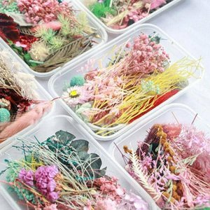 Box Dried Flowers Resin Real Pressed Dry Flowes Leaf For Beauty Decals Art Daisy Epoxy Jewelry Fillings Mold Making Tools L6R0 Decorative &