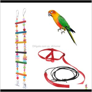 Other Supplies Parrot Safe Training Outdoor Traction Harness Leash And Pet Bird Cage Toy Swing Ladder Afl 9U53S