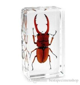 Fortune Stag Beetle Espécimen Acrílico Resina Incrustada Insecto Educación Juguetes Papeles Papeles Transparentes Mouse Niños Nuevo Tipo Biología Ciencia Kits