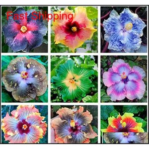 Other Supplies Patio Lawn Home Garden Drop Delivery 2021 100 Pcs Giant 24Kinds Rosasinensis Mix Color Hibiscus Tree Seeds For Flower Potted P