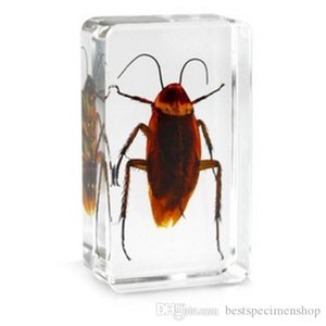 Cucaracha biología espécimen resina acrílico incrustado insectos reales papel peso transparente bloque de ratón niño nuevo ciencia aprendizaje de juguetes