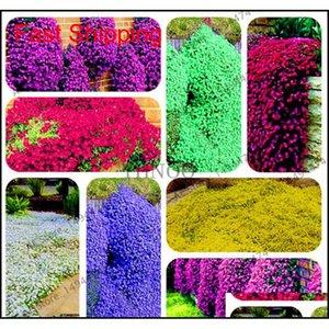 Altri rifornimenti Patio Lawn Home Drop Consegna 2021 200 PZ Colore misto Rock Cress Credito Timo Semi Perenne Cover Ground Flower per DIY G