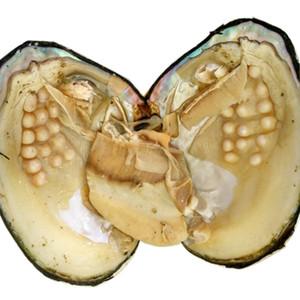 Große Oyster Pearls Monster Pearl Oyster Amazing Natural Multi Color Frischwasserperlen-Auster in vakuumverpacktem 10pcs / lot BP008