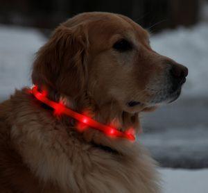 USB wiederaufladbares LED Hundehalsband Wasserdichtes Light-Up Night Sicherheitshalsband Fashing Tube Band Grow in the Dark