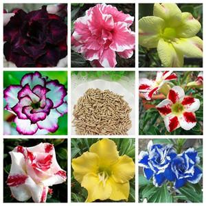 Sıcak Satış Adenium Obesum Tohumları Balkon Çiçekler Tohumları Gökkuşağı Çöl Gül Tohumları 8 Stil Seçici
