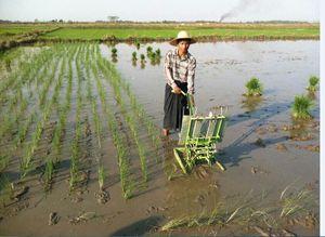 2018 Top venta de arroz Manual trasplantadora, acodado mano trasplantadora de arroz con cáscara, plantador manual, sembradora