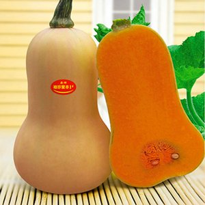 1 Original Pack Around 75pcs 크림 스쿼시 Miben 번호 .1 종자 .Styet Butternut 호박 야채 씨앗 .Flruit Seeds For Home Garden
