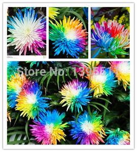 100 / bolsa de semillas de flores de crisantemo del arco iris, color raro, nueva llegada planta de flor de jardín de hogar